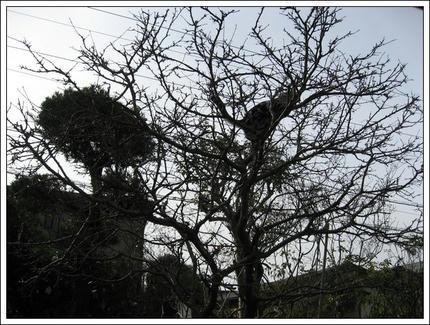 撮影日:2010-01-03