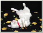Cats_photo0023.jpg