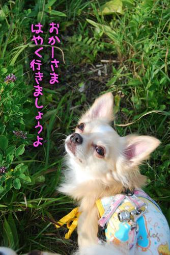 070827_kuru_a1.jpg