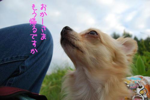 070827_kuru_a13.jpg