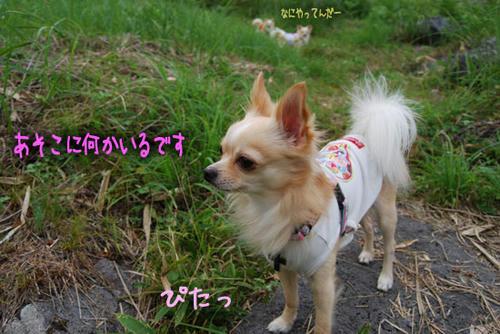 070901_miha24.jpg