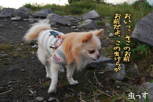 070912_kuruma6.jpg