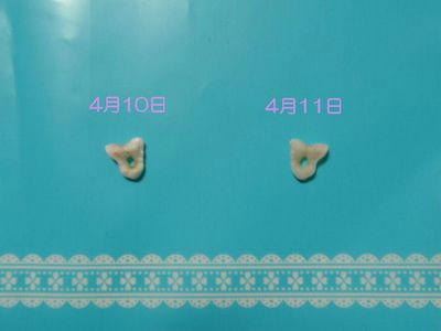 P4110973-2.jpg