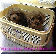 ciao-1.jpg