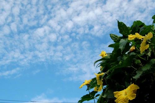 空とヘチマ