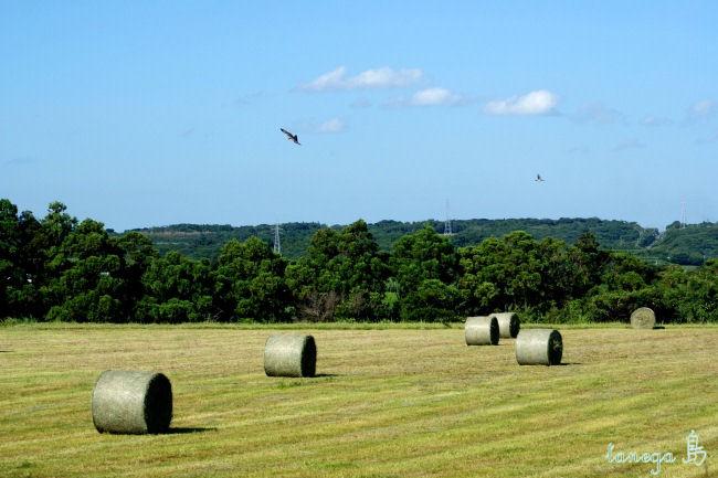 輪之尾の牧草ロール
