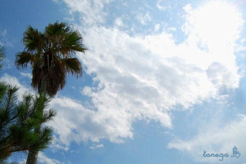 熊野海岸の空