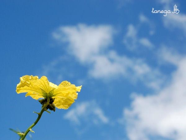 空とへちま