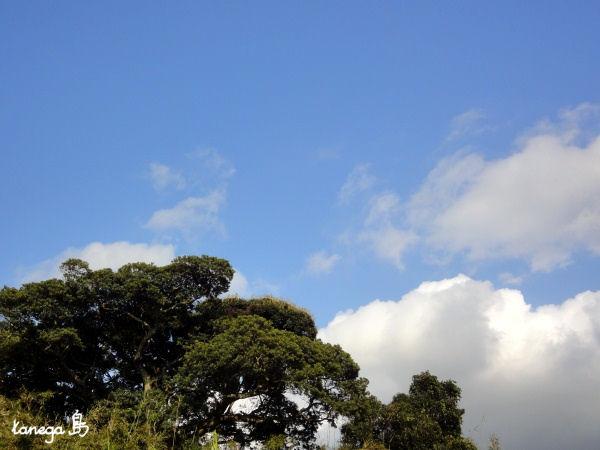 畠田の大木と空