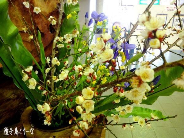 種子島こりーな 生け花