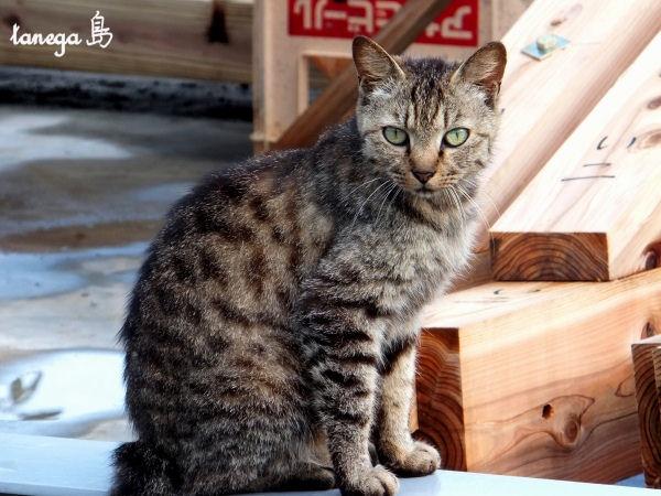 ふぅ先生の猫