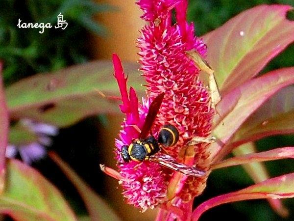 蜂&カメムシ