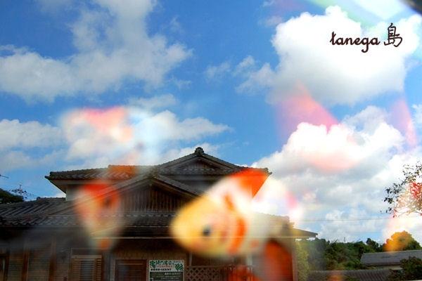 金魚と映り込みの空
