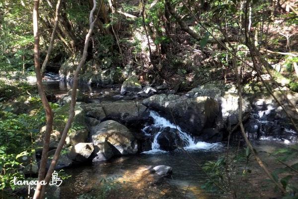 雄淵雌淵の滝