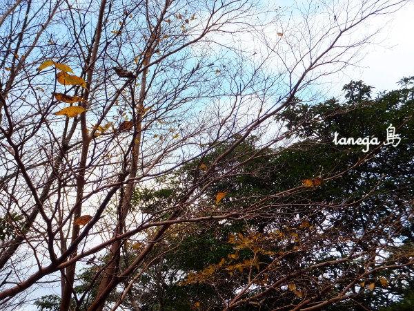 屋久島の冬の空