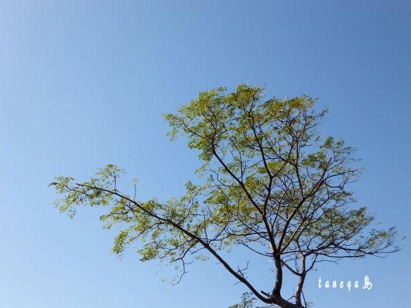 種子島の空