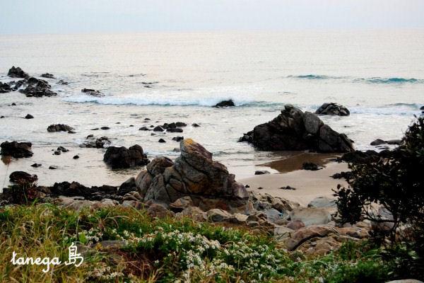 竹屋野海岸