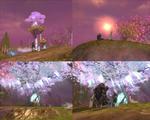 ブルストホーニンの桜を見に、るーさんと深夜のおさんぽ!