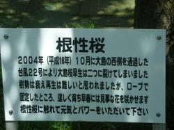 e04b0c48.jpeg