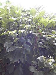 20110624-2.jpg