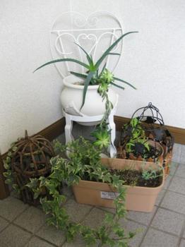 玄関フードの寄せ植え