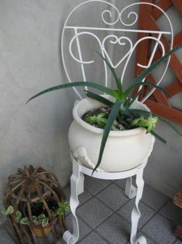 玄関フードの多肉植物の寄せ植え