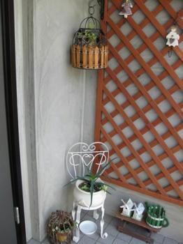 玄関フードの植物