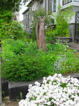 2013.06.05撮影:Yちゃんの庭