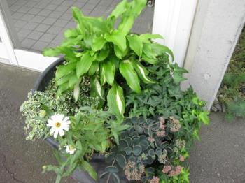 """ガーデニング 庭 花 """" mukuの庭"""