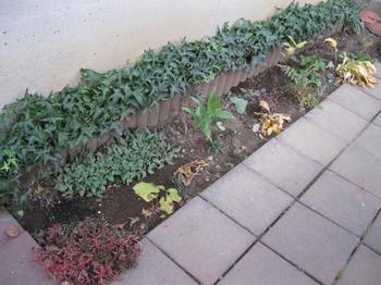 秋の庭 ガーデニング