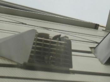 mukuの庭 雀の巣