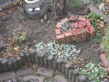 mukuの庭 庭に来た雀