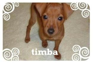 timba2.jpg