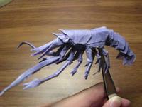 Shrimp1.7_1.jpg