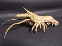 Shrimp2_2.jpg