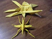 crane-fly3.jpg
