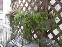 succulent_1.jpg