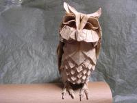 owl3_1.jpg