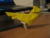 s-bird_1.jpg