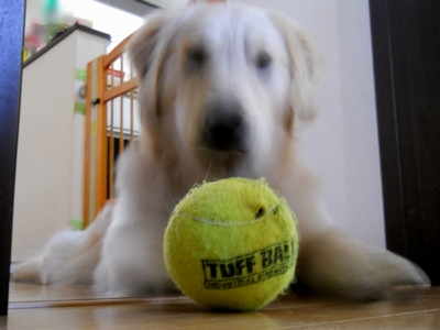 Petsport Giant Tuff Ball 献上15日目