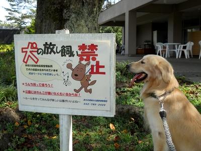 ゴールデンレトリバー、カイザー皇帝と犬看板@津久井湖城山公園、花の苑地