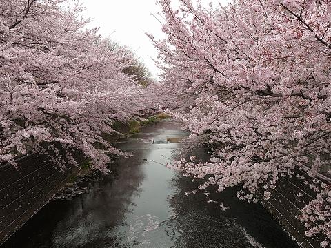 2013年春のお花見