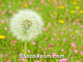 たんぽぽと色とりどりの花