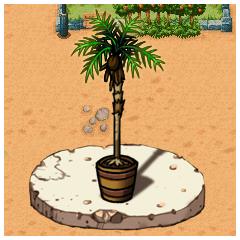 シュシュの鉢植