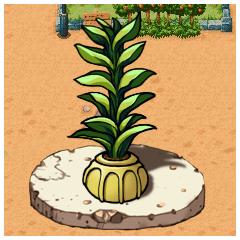 パラスの鉢植