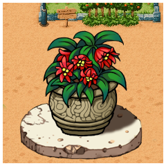 ザンザの鉢植