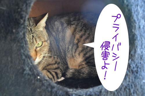 b_DSC_4139.jpg