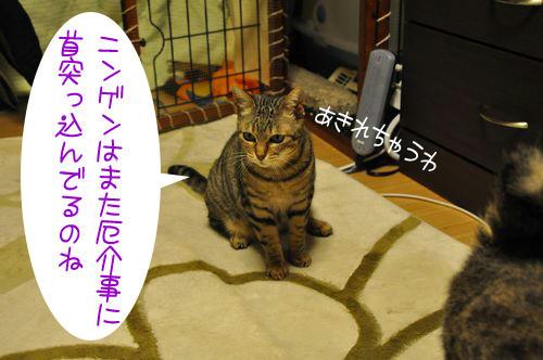 b_DSC_4489.jpg