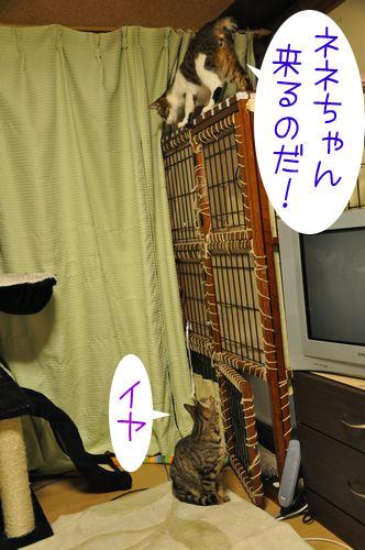 b_DSC_4596.jpg