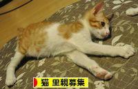 100812_poshi.jpg